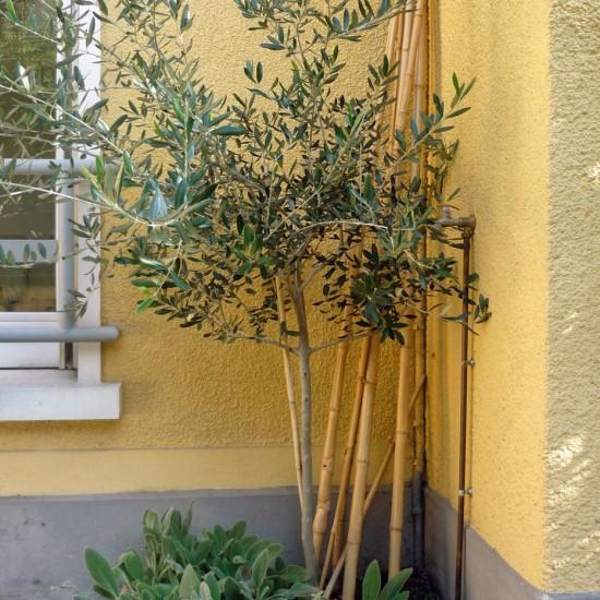 petit jardin cour